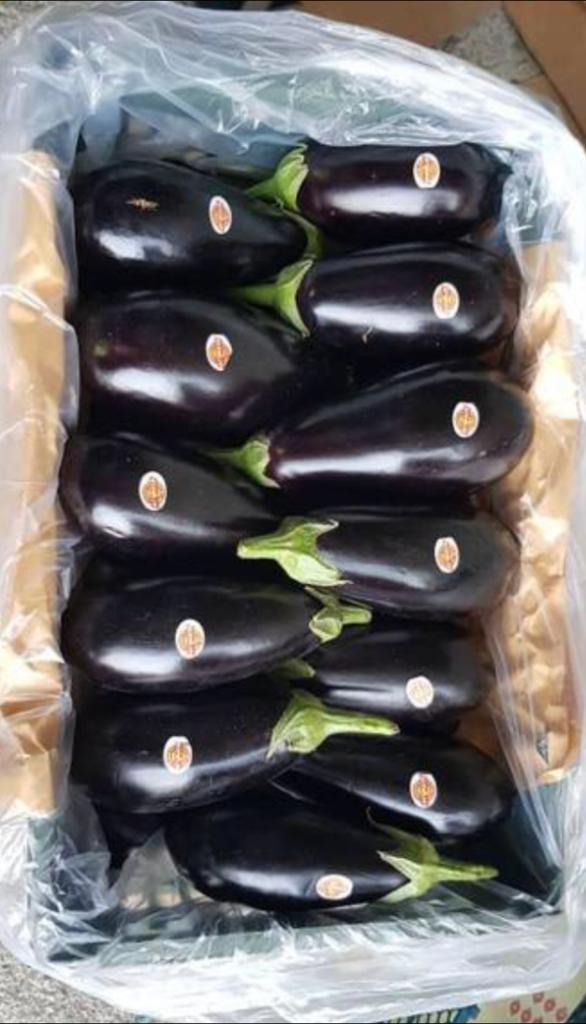 Eggplant-03